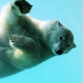 Everything's more fun at Assiniboine Park Zoo!