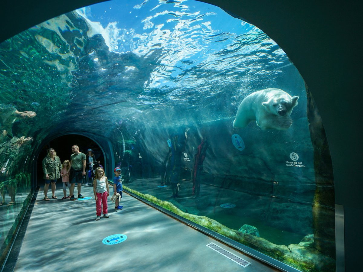 WATCH: Save your summer at Assiniboine Park Zoo -