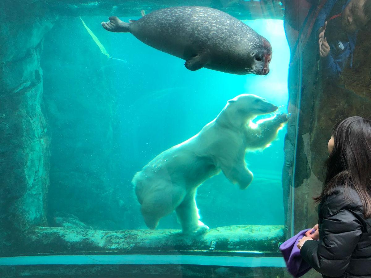 Spring Break 2018 in Winnipeg  - Assiniboine Park Zoo (Lauren Harvey)