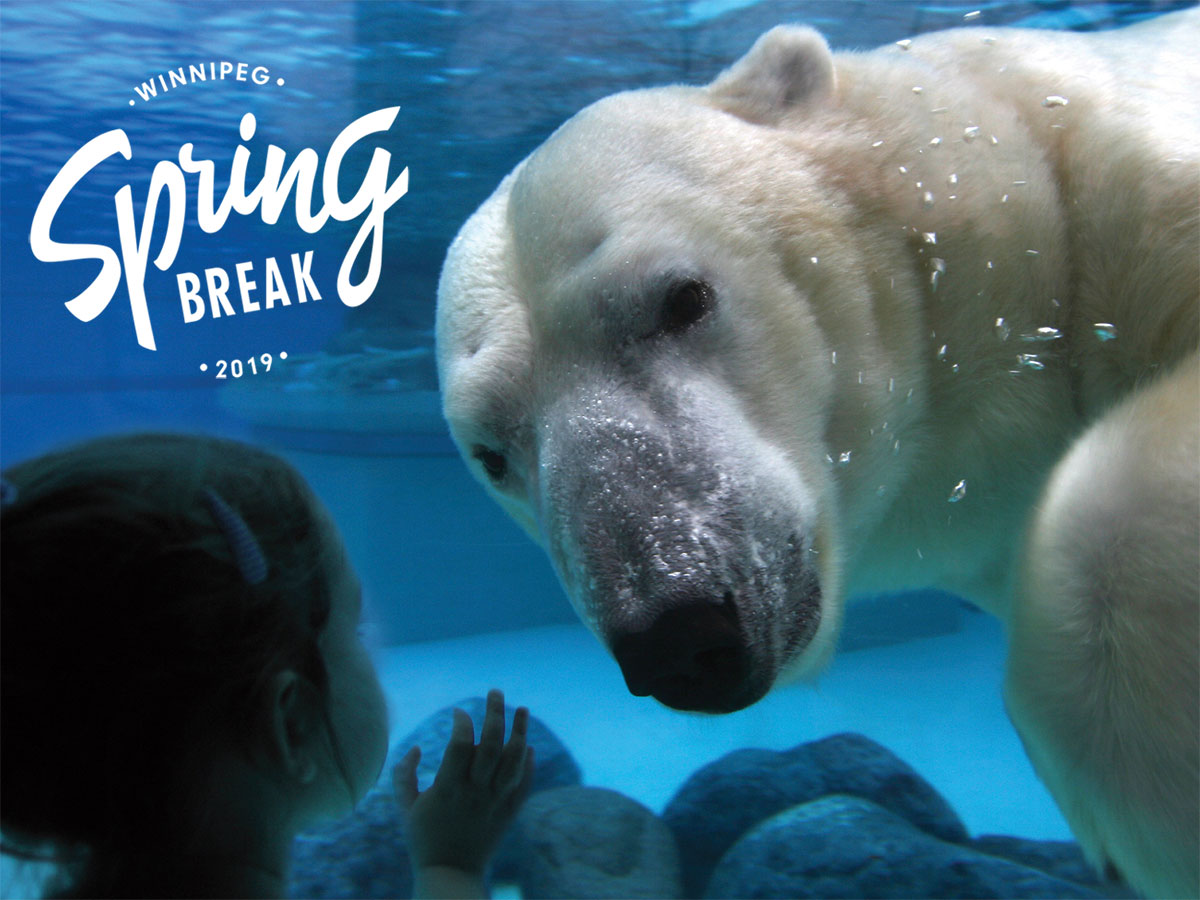 Why families should flock to Winnipeg for Spring Break in 2019  -