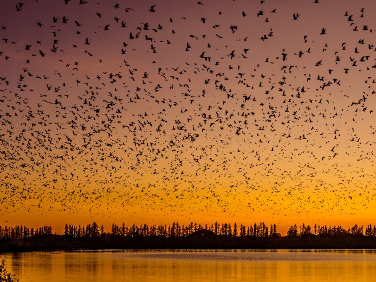 Migrate to FortWhyte Alive this autumn for Goose Flight Feasts - The setting for goose flight feasts at FortWhyte Alive (photo by Kristhine Guerrero)