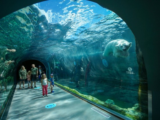 WATCH: Save your summer at Assiniboine Park Zoo