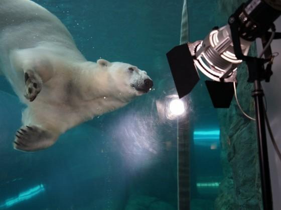 Meet the stars of CBC TV's Arctic Vets