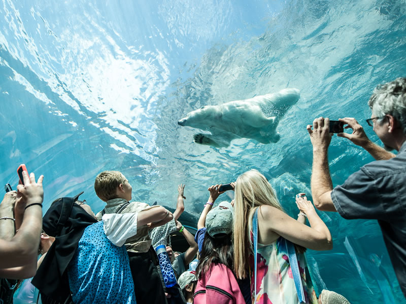 Journey to Churchill at Assiniboine Park Zoo