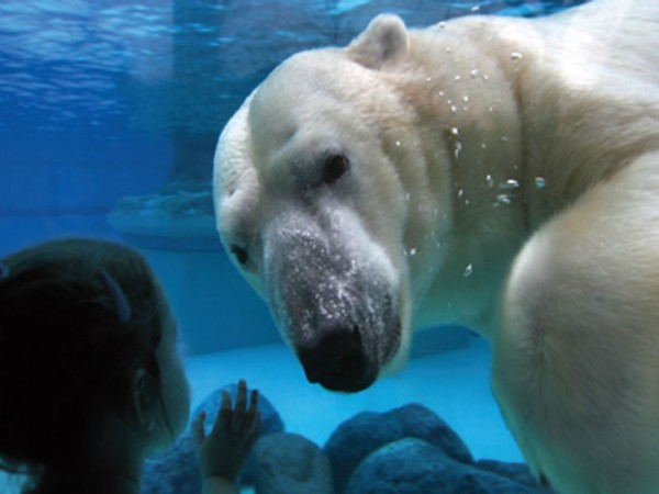 Discover Assiniboine Park Zoo in Winter - representative image