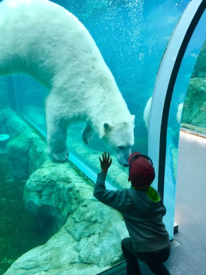 DISCOVER THE WONDERS OF THE NORTH IN THE HEART OF THE CONTINENT - representative image